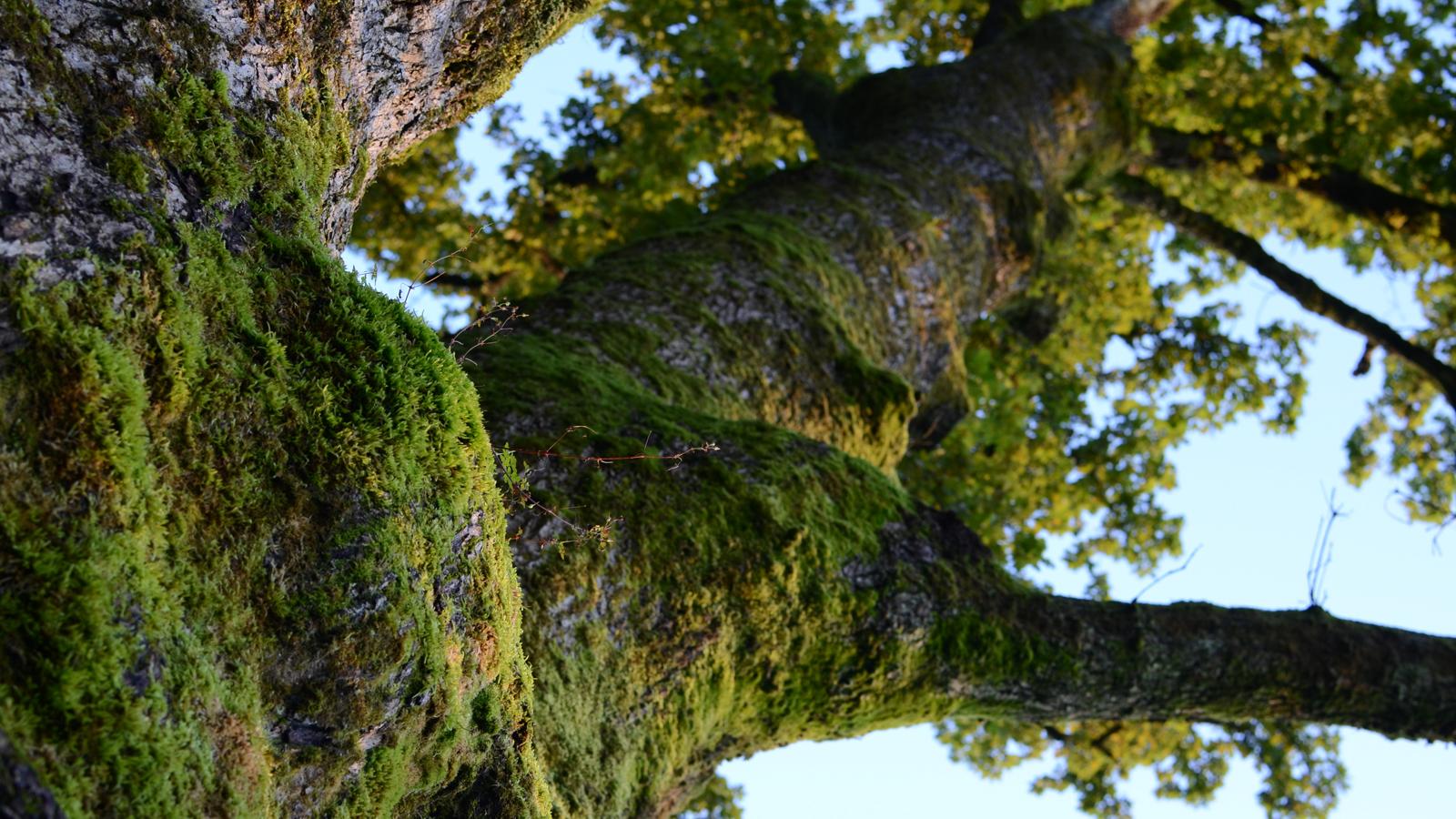 alcarol-undergrowth-collection-2