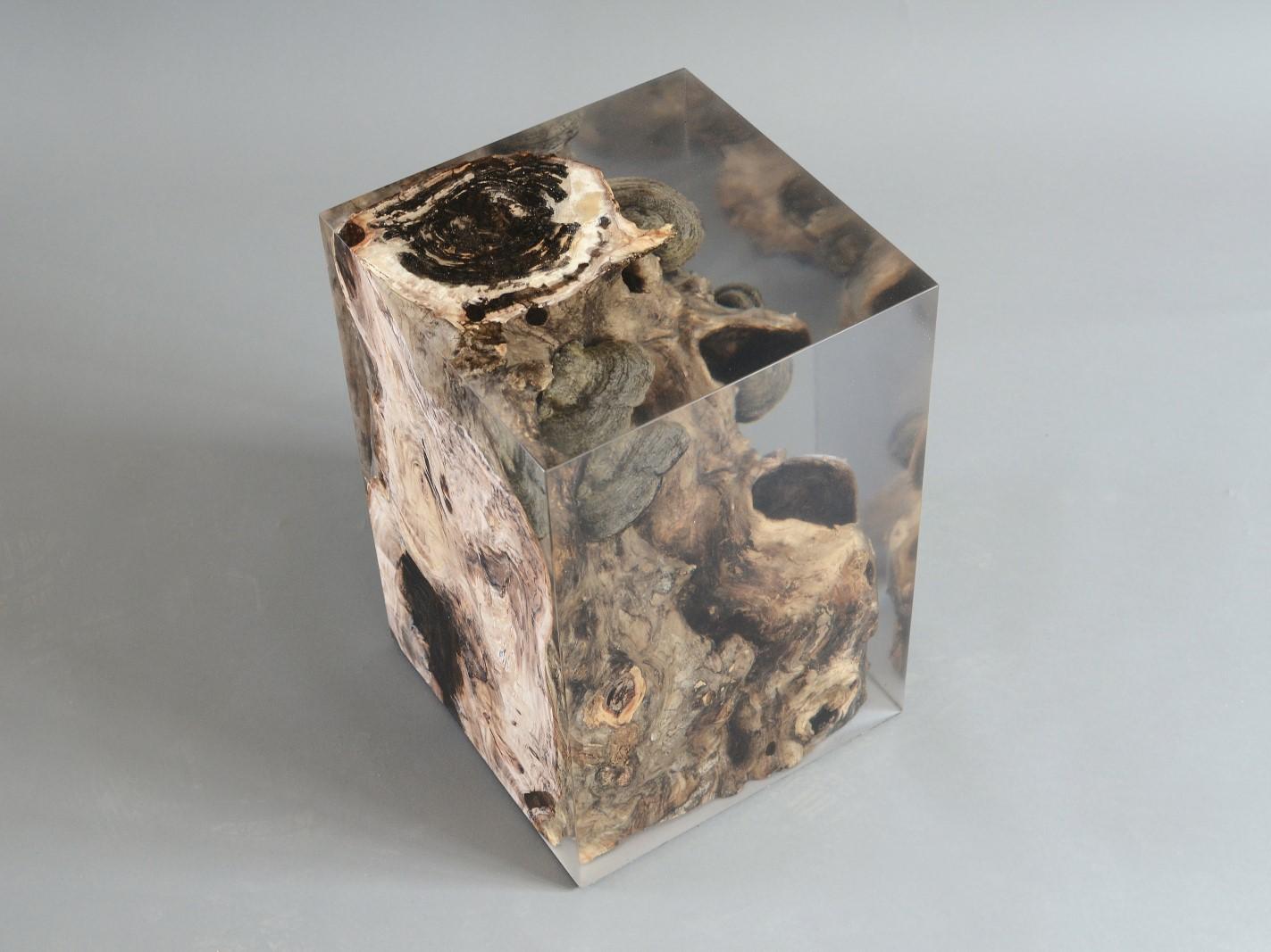 alcarol-fungi-stool-poplar-8