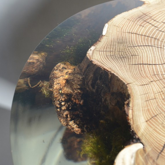 alcarol_Surfacing Stump_09